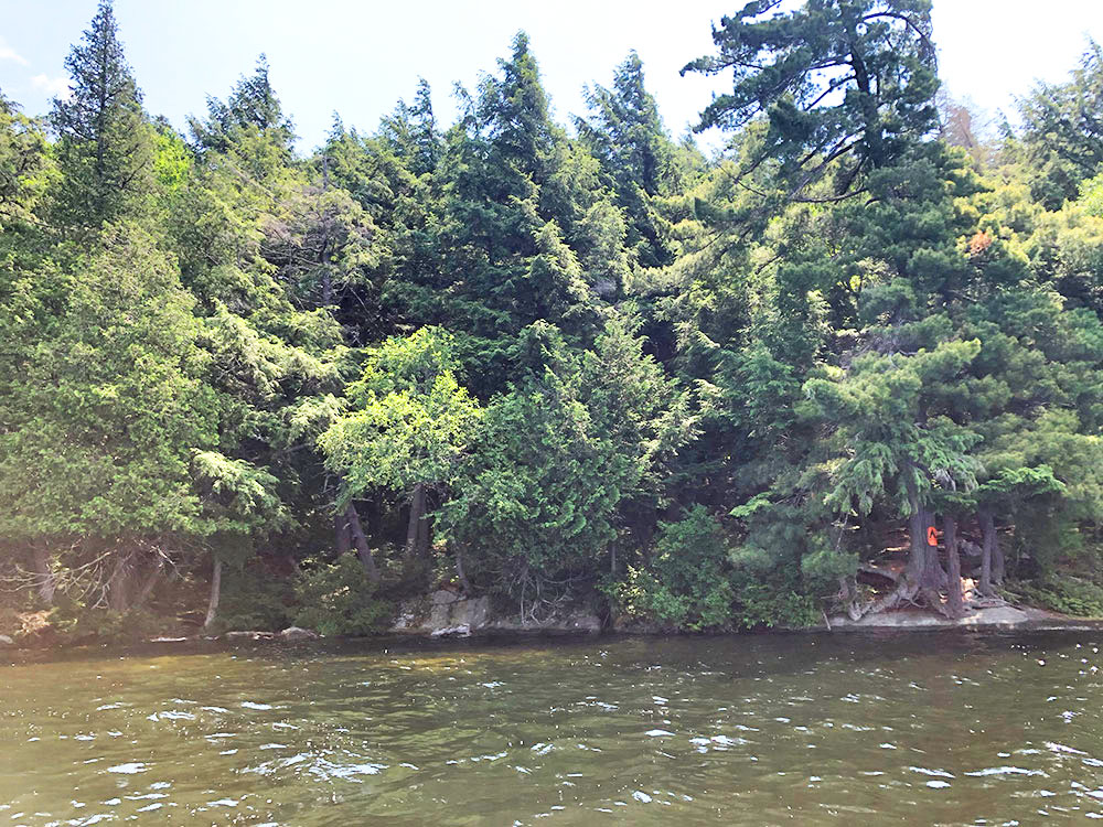 Little Trout Lake Campsite 4 Algonquin Park view of the campsite from the water