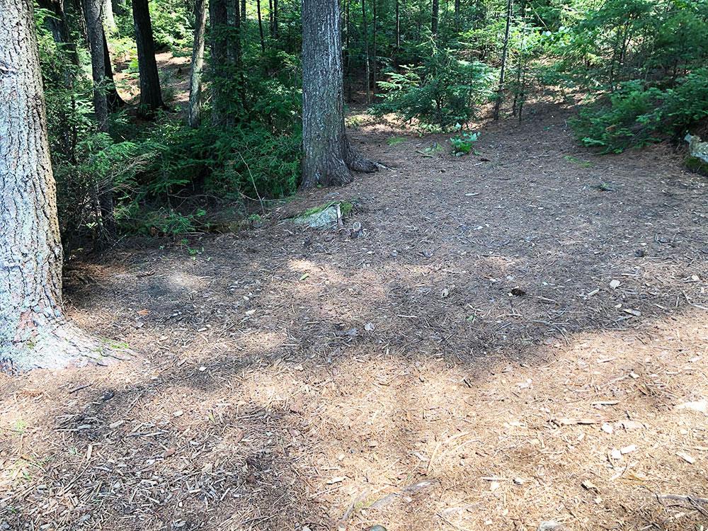 Little Trout Lake Campsite 5 Algonquin Park large area to pitch a tent
