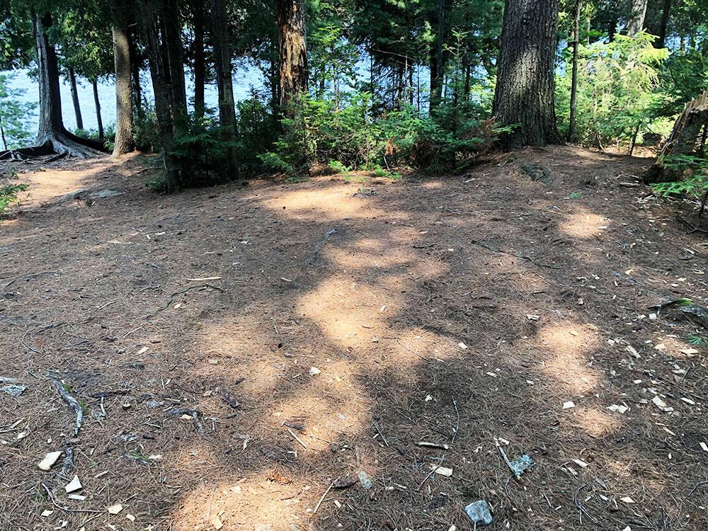 Little Trout Lake Campsite 5 Algonquin Park large flat ground for tents