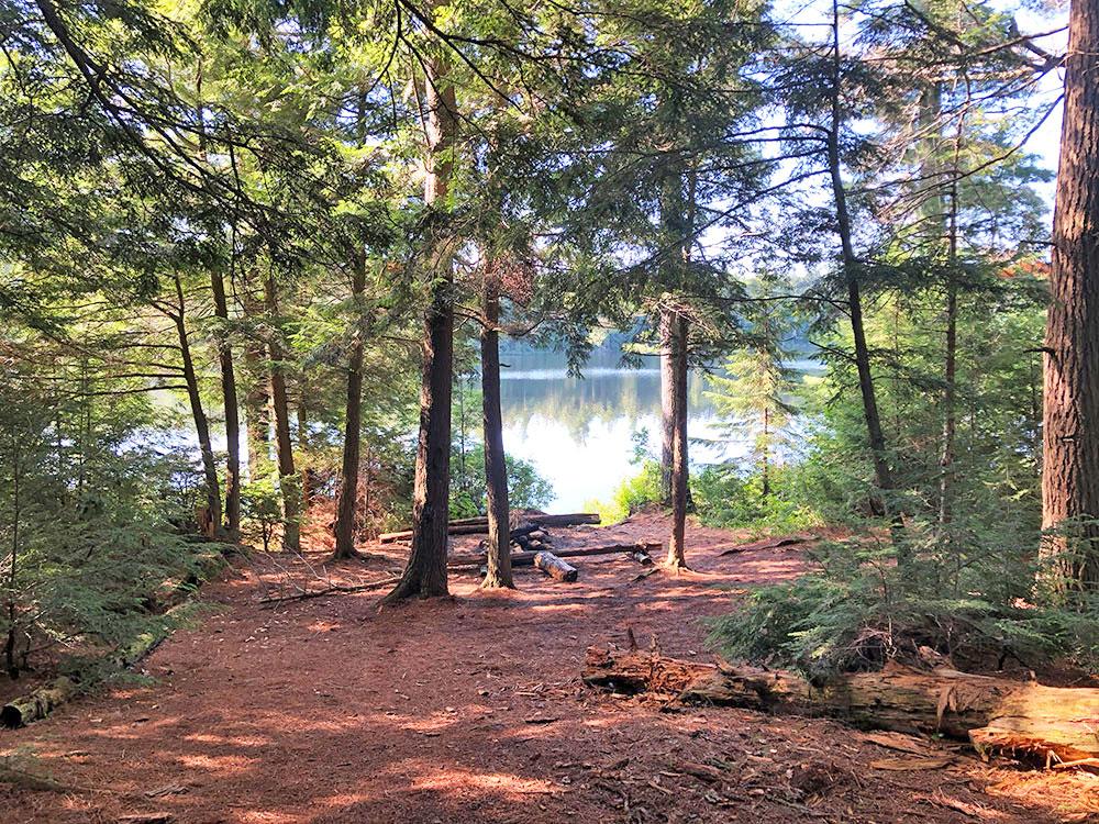 Little Trout Lake Campsite 8 Algonquin Park interior of the campsite