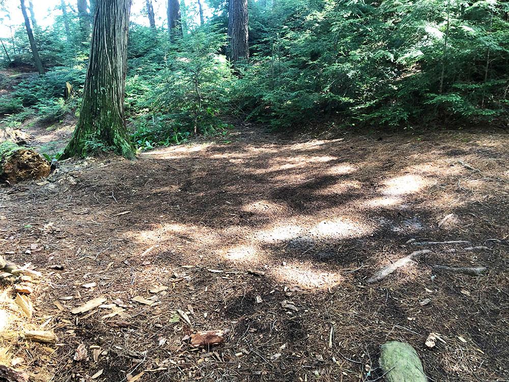 Little Trout Lake Campsite 8 Algonquin Park tent spot area