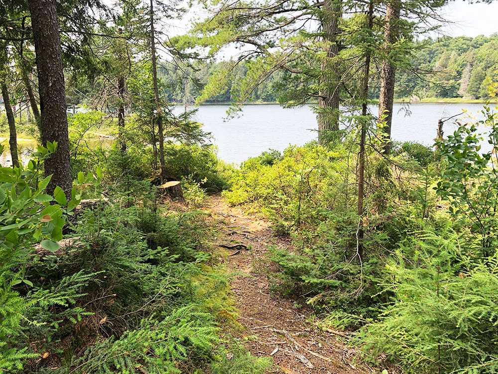 Queer Lake Campsite #1 2021 trail from landing into site