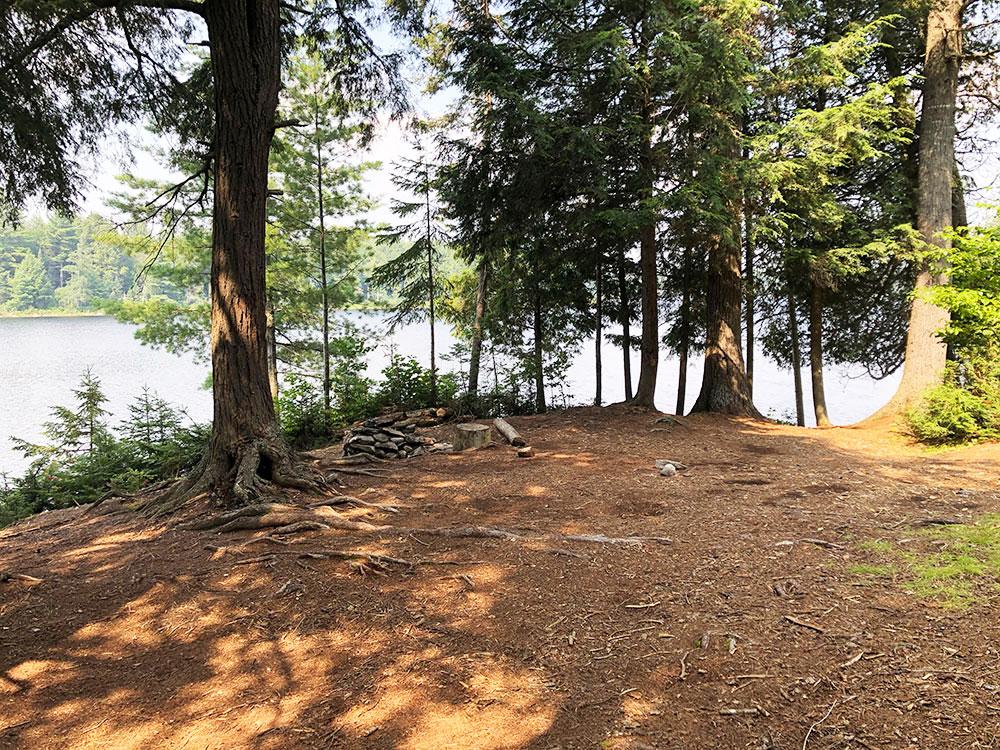 Queer Lake Campsite #8 2021 interior of the campsite