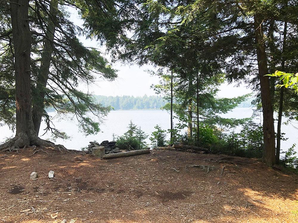 Queer Lake Campsite #8 2021 interior of site