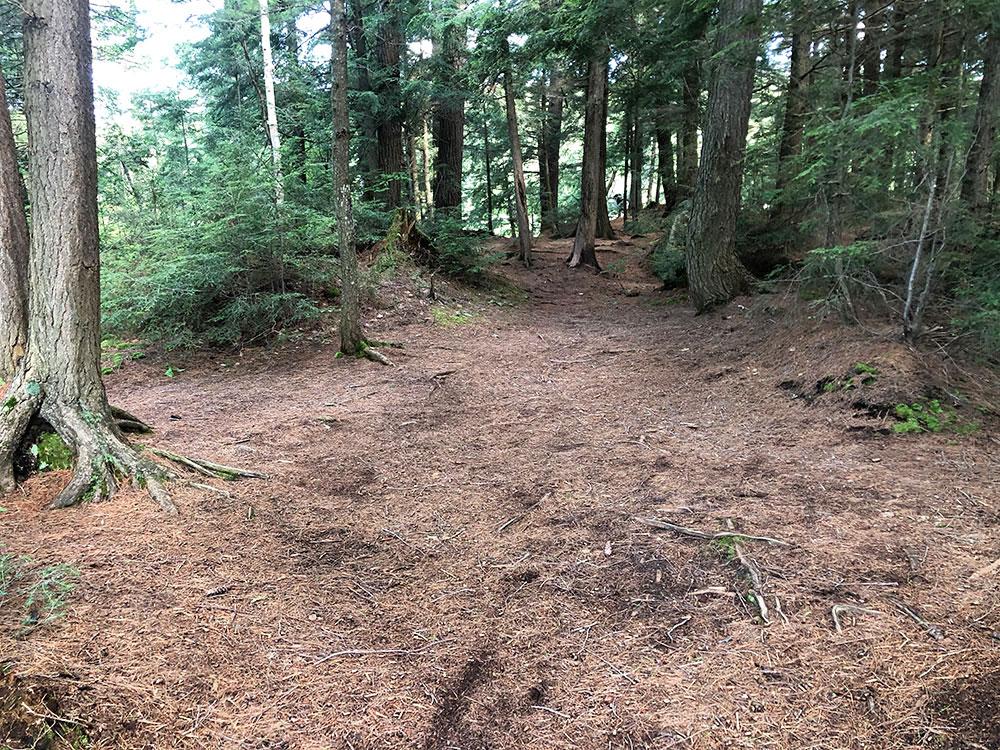 Ralph Bice Campsite 4 Algonquin Park flat ground for tents