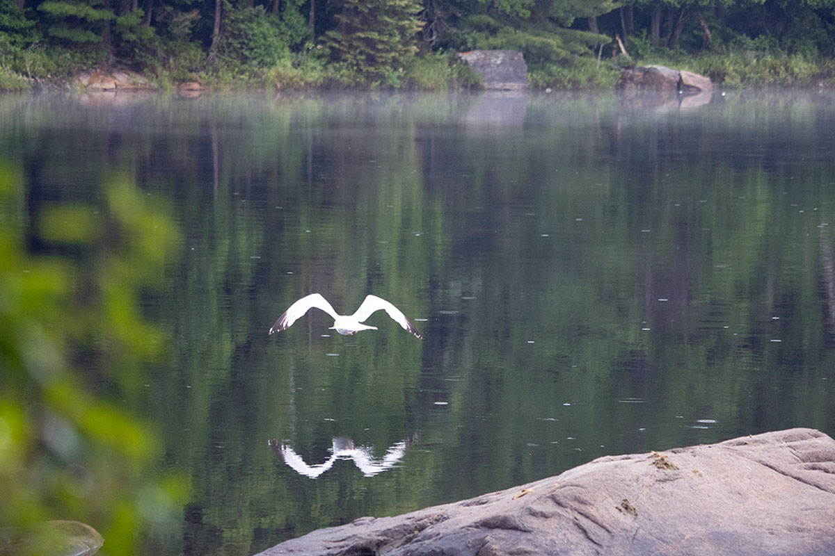 Bird flying over Queer Lake July 2021
