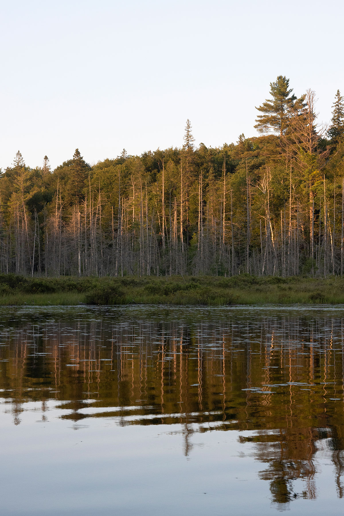 Dead trees on Queer Lake in July 2021 - 6
