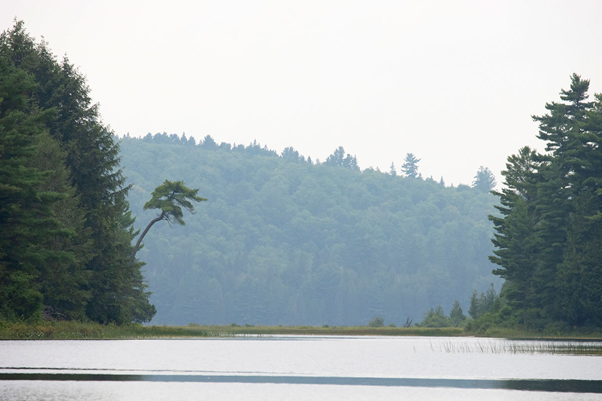 Farm Lake shoreline Algonquin Park August 2021