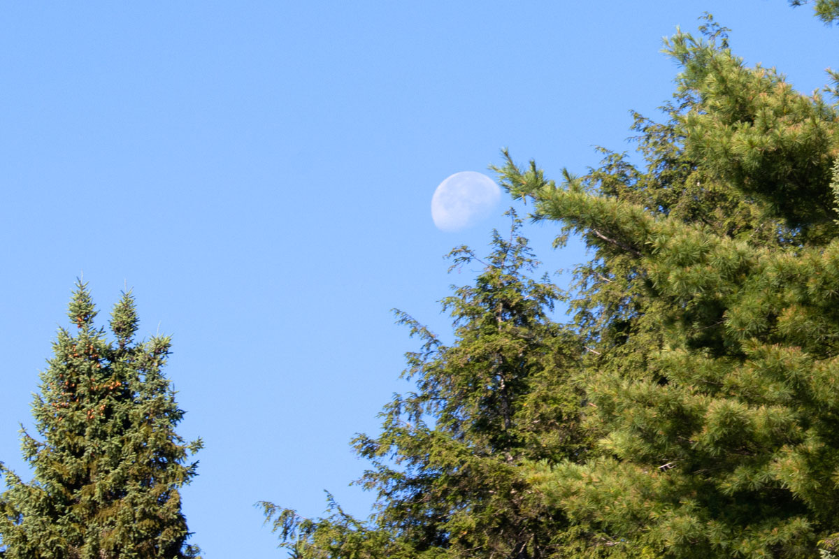 Moon setting among the trees on Queer Lake July 2021 - 1