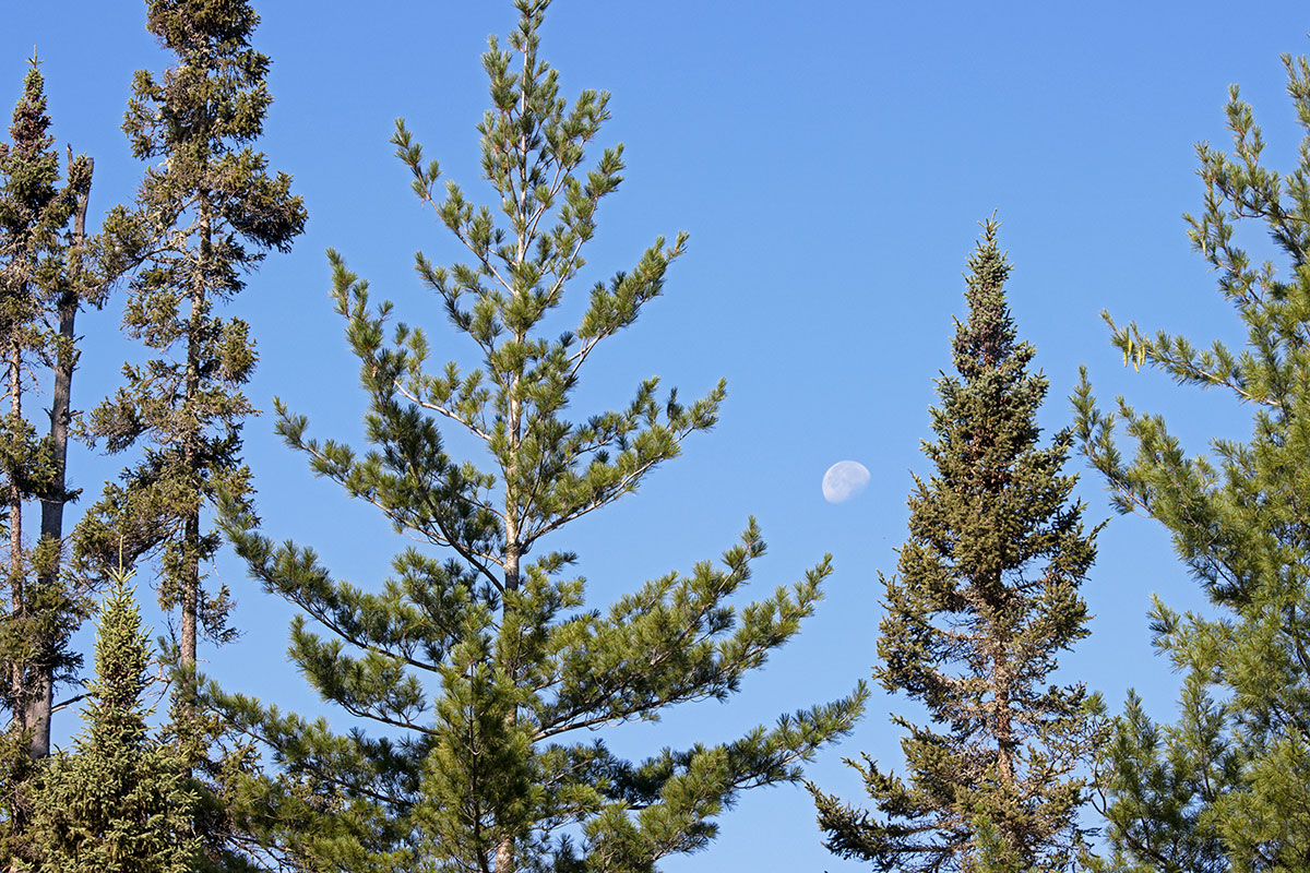 Moon setting among the trees on Queer Lake July 2021 - 3
