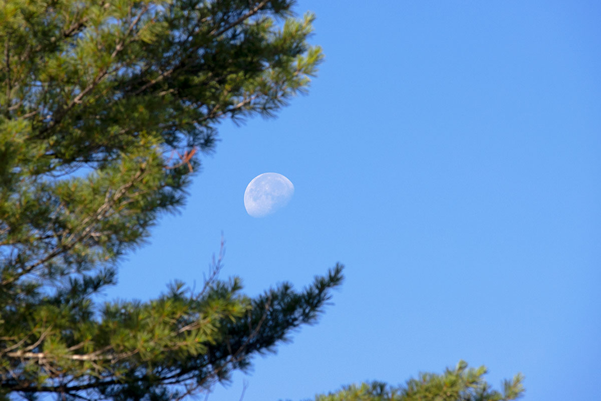 Moon setting among the trees on Queer Lake July 2021 - 5