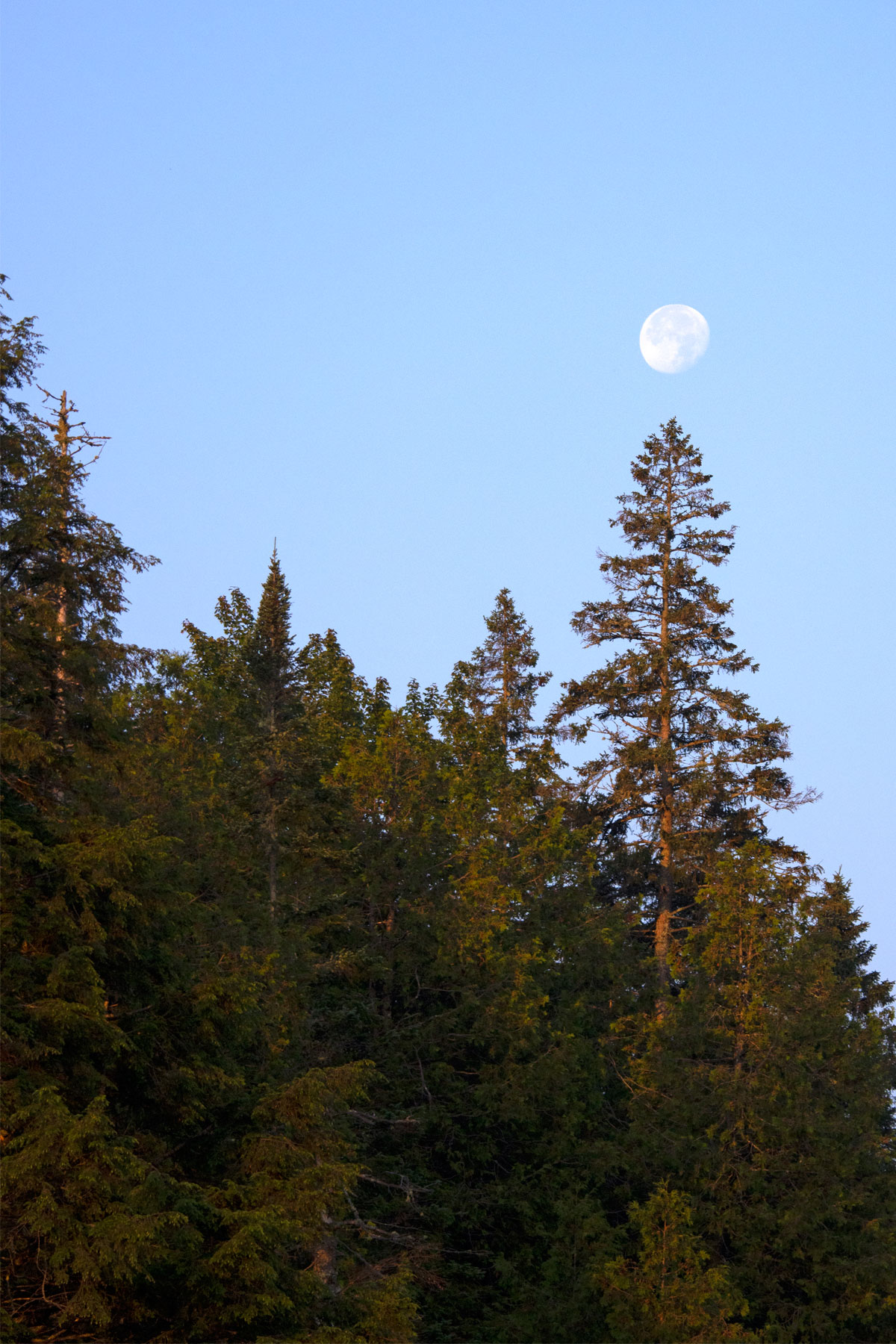 Moon setting among the trees on Queer Lake July 2021 - 7