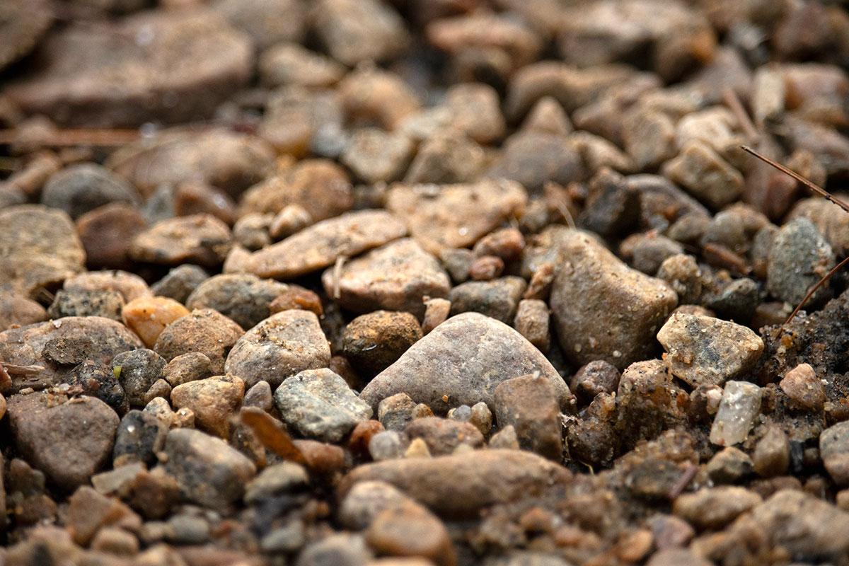 Pebble shoreline on Shirley Lake in Algonquin Park 2