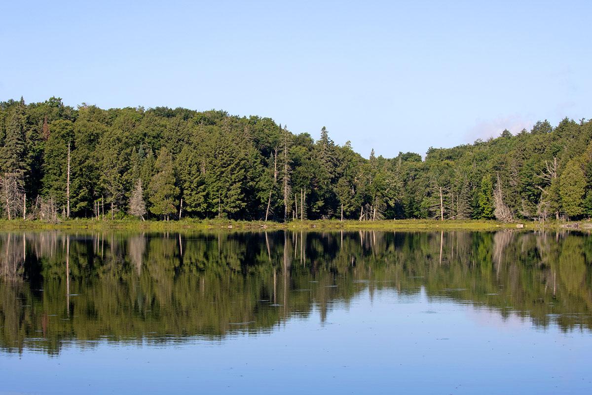 Queer Lake shoreline Algonquin Park July 2021 - 8