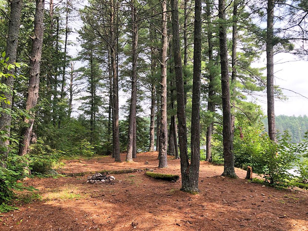 Ryan Lake Algonquin Park Campsite 1 interior of the campsite