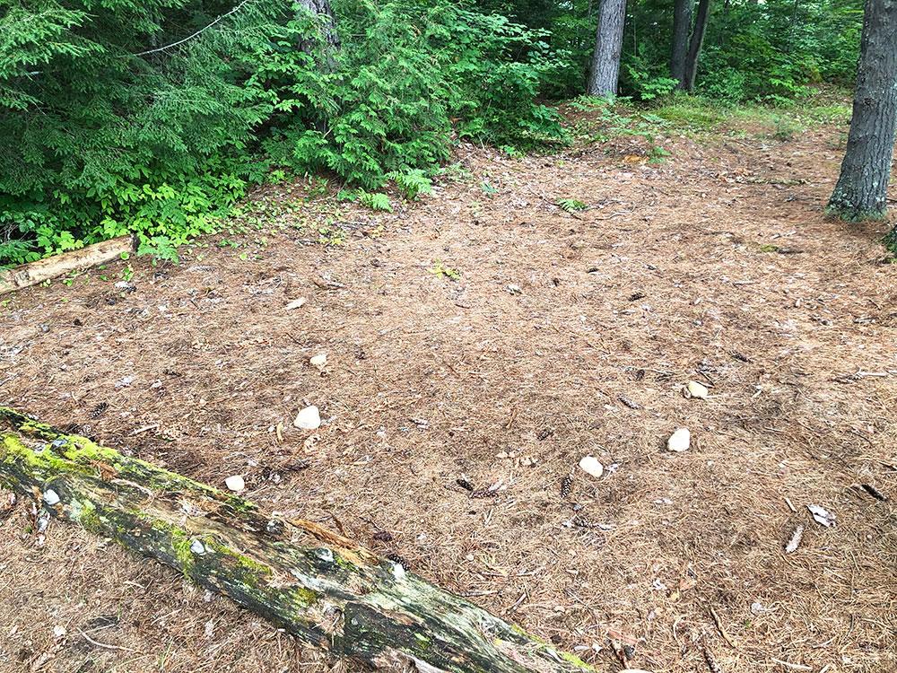 Ryan Lake Algonquin Park Campsite 1 tent spot 2