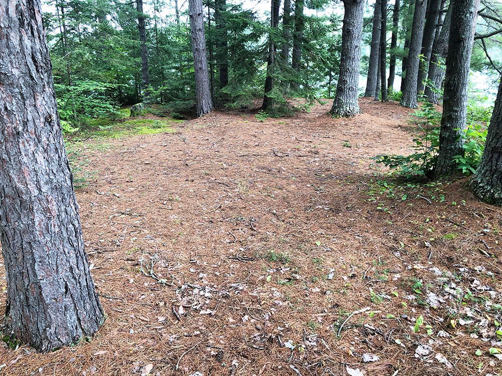 Ryan Lake Algonquin Park Campsite 1 tent spot 3