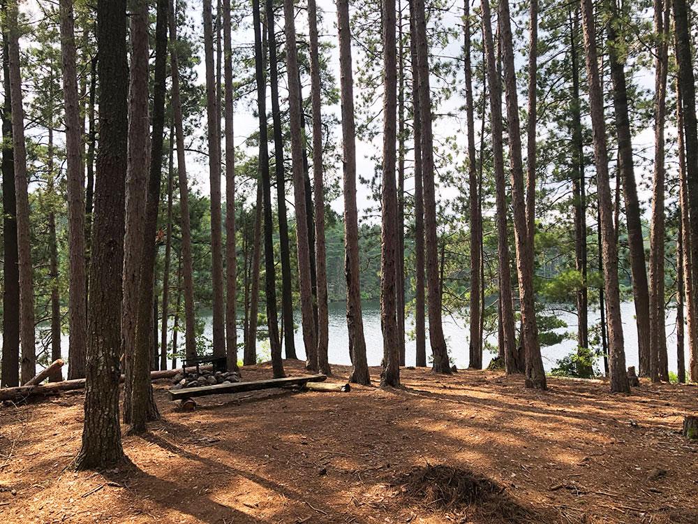 Ryan Lake Algonquin Park Campsite 11 interior of the campsite