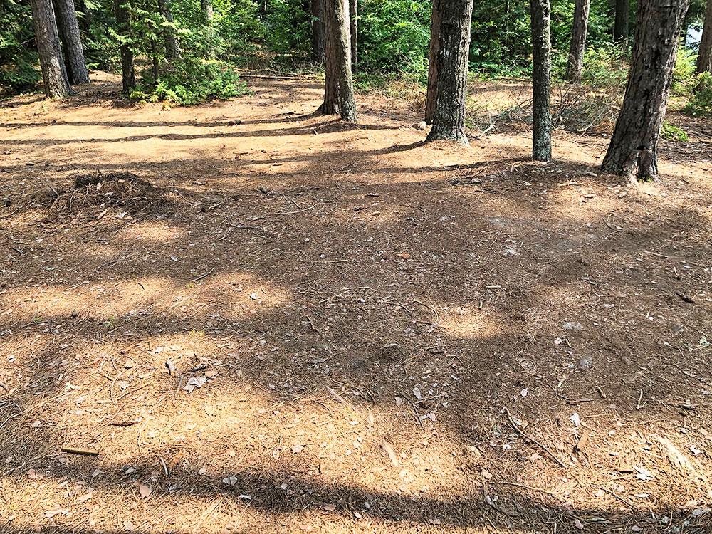 Ryan Lake Algonquin Park Campsite 11 tent spot 1