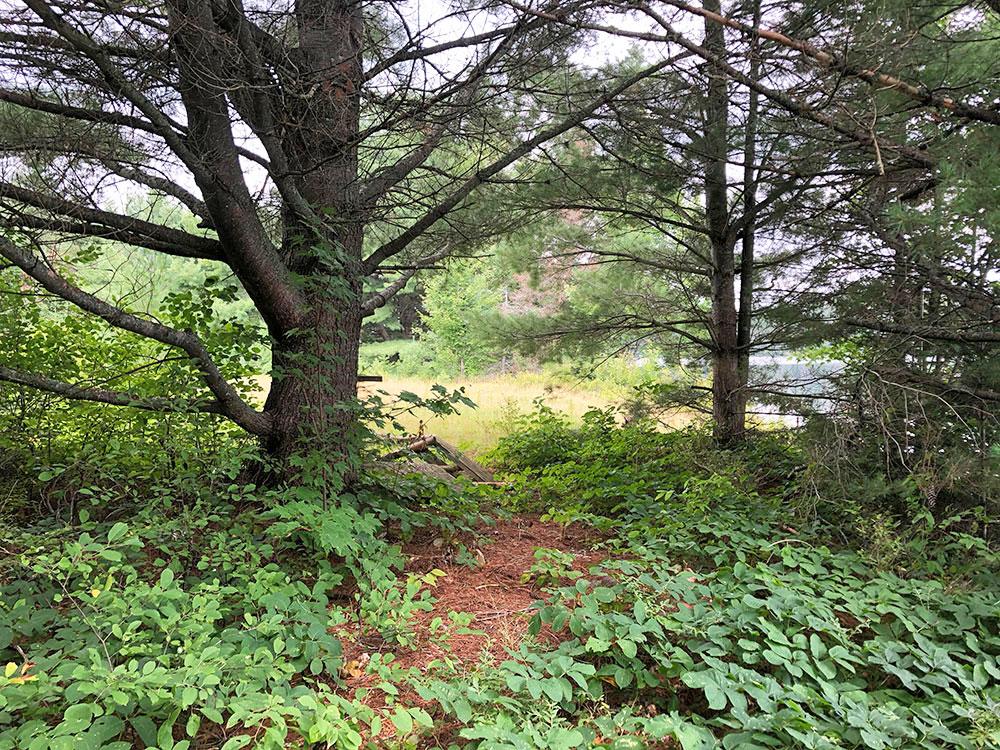 Ryan Lake Algonquin Park Campsite 2 interior of the campsite 2