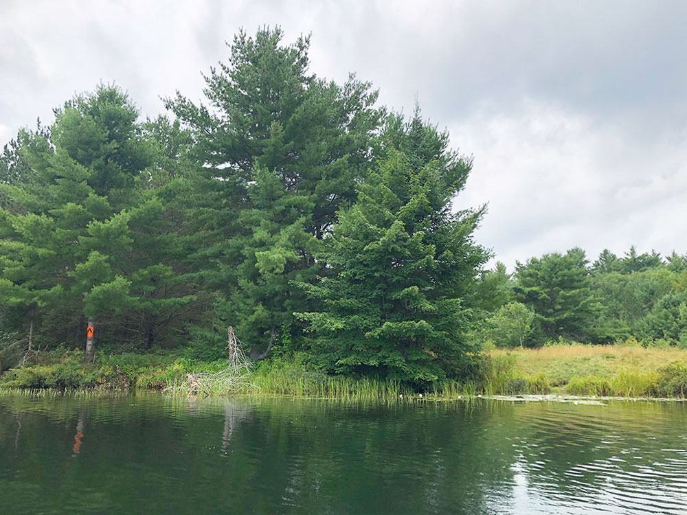Ryan Lake Algonquin Park Campsite 2 view of the campsite from the water