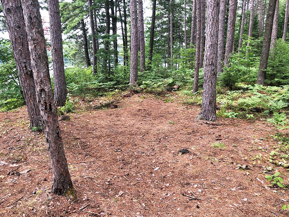 Ryan Lake Algonquin Park Campsite 3 tent spot 1