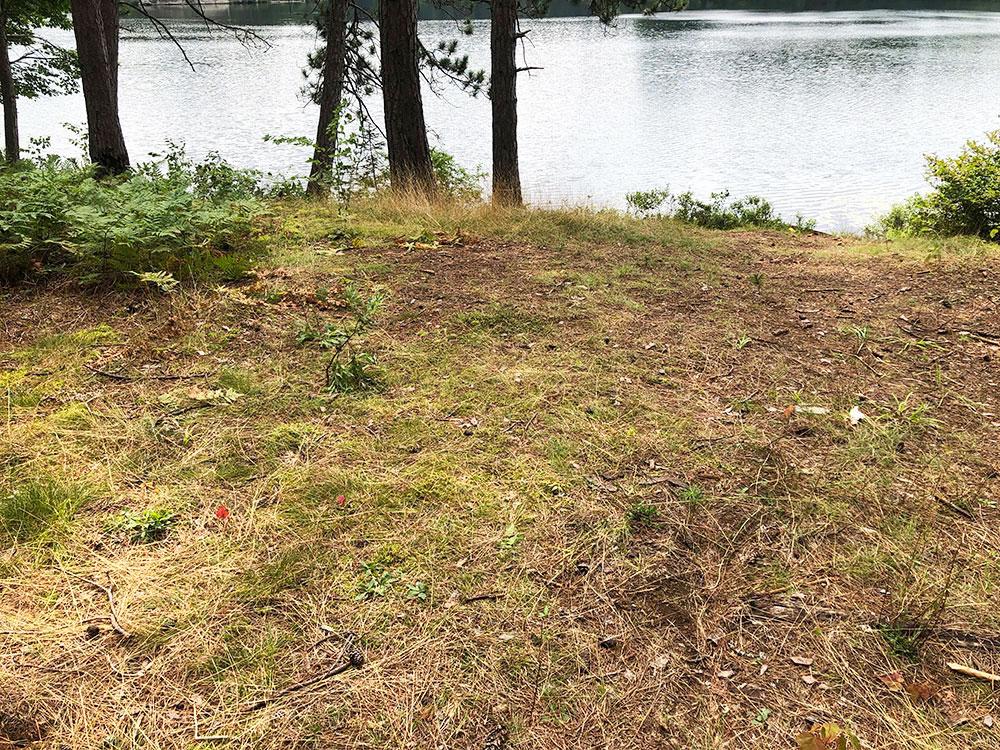 Ryan Lake Algonquin Park Campsite 3 tent spot 2
