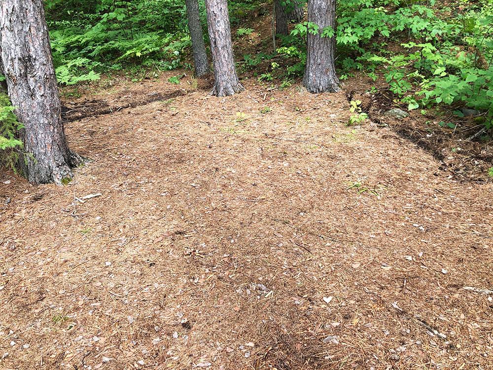 Ryan Lake Algonquin Park Campsite 4 tent spot 3
