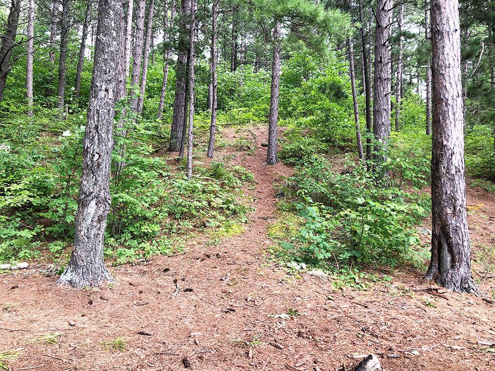 Ryan Lake Algonquin Park Campsite 4 trail behind the campsite