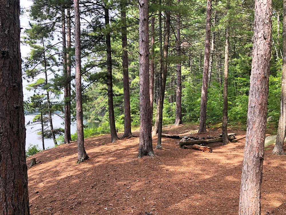 Ryan Lake Algonquin Park Campsite 5 interior of the campsite