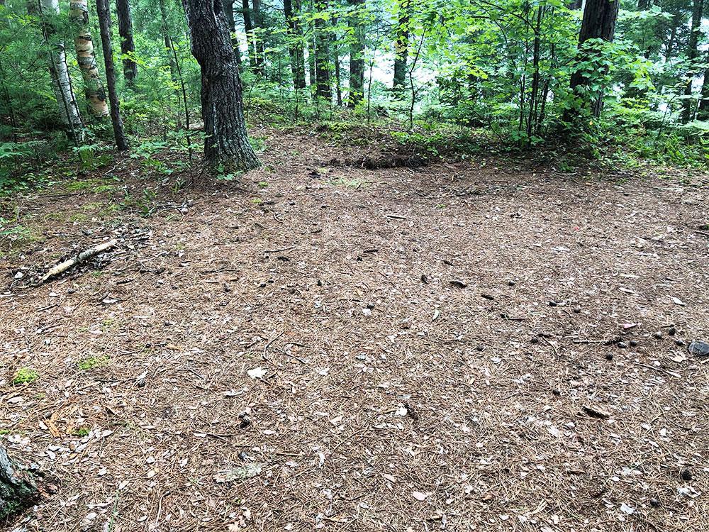 Ryan Lake Algonquin Park Campsite 7 tent spot 3