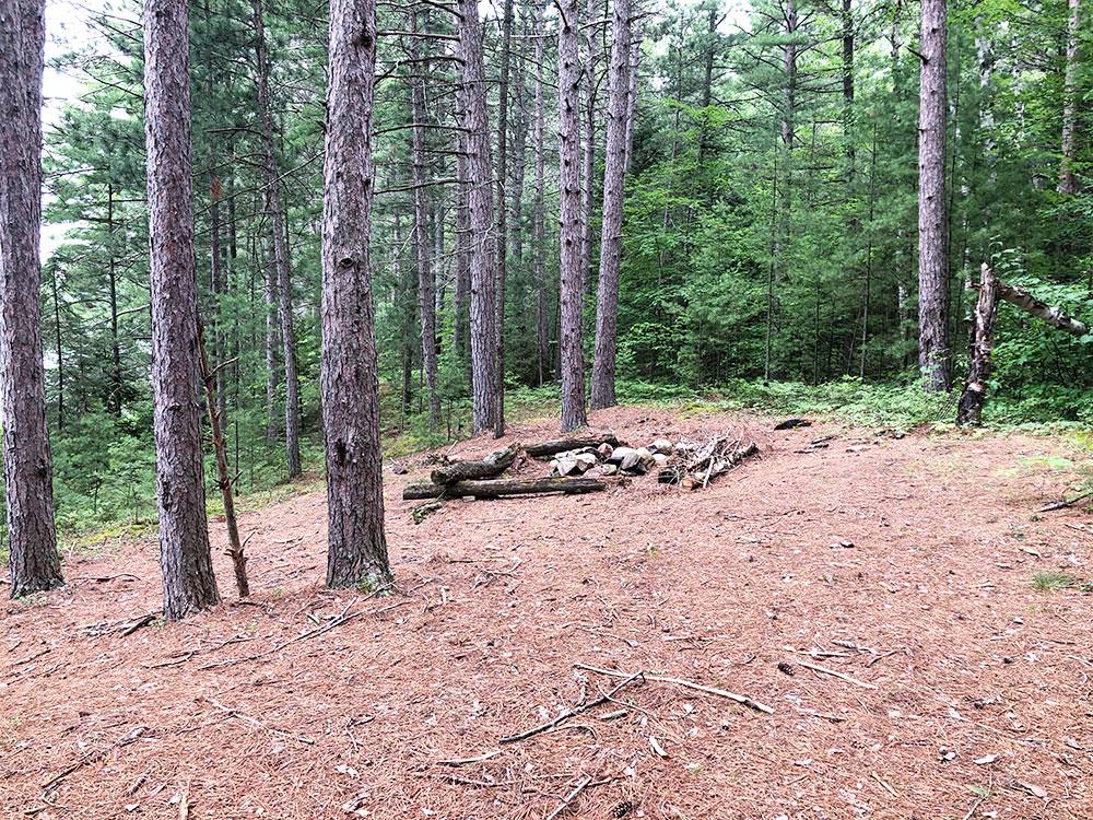 Ryan Lake Algonquin Park Campsite 8 interior of the campsite