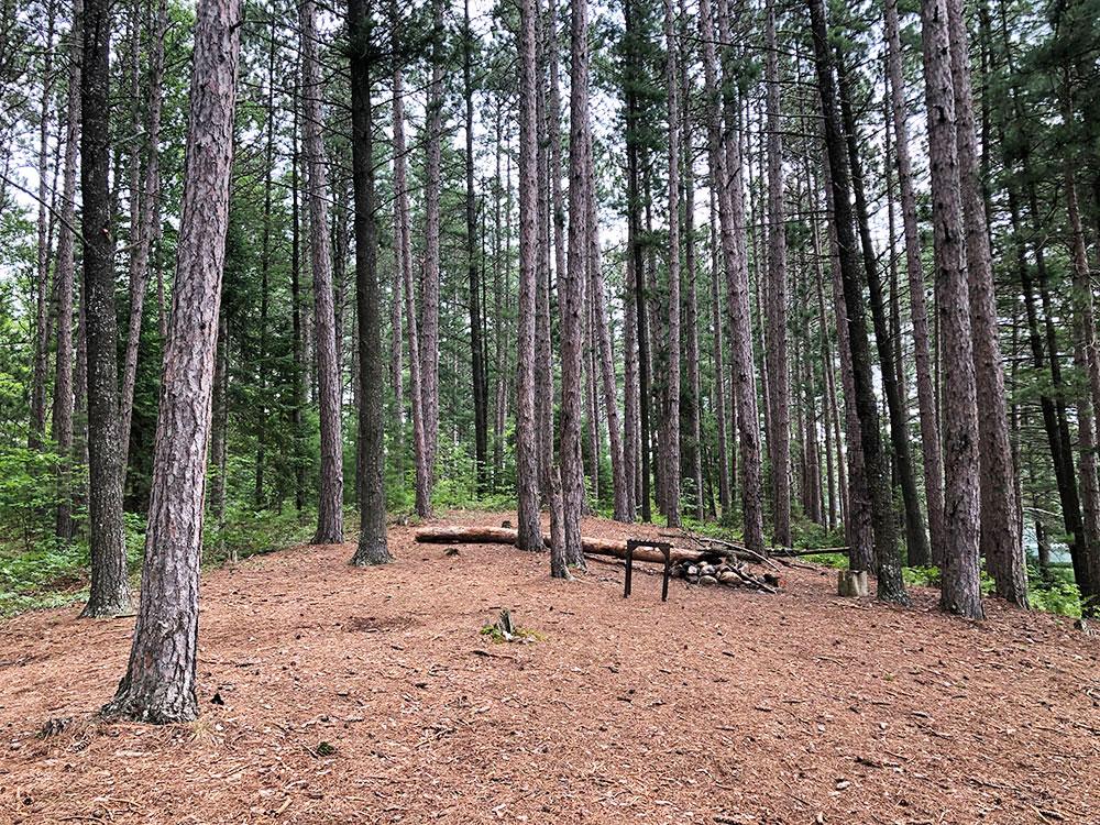 Ryan Lake Algonquin Park Campsite 9 interior of the campsite 2