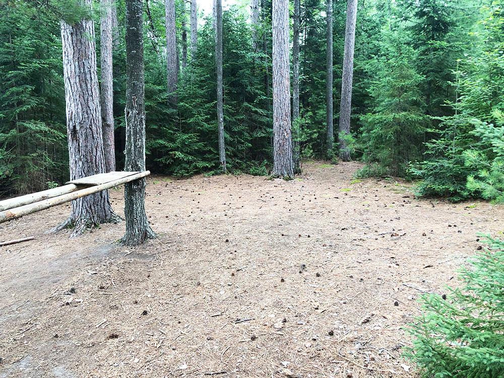 Shirley Lake Algonquin Park Campsite 1 tent spot 1