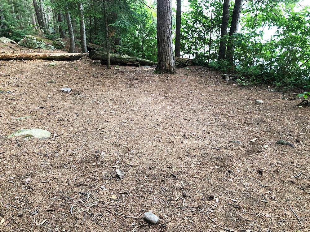 Shirley Lake Algonquin Park Campsite 4 tent spot 1