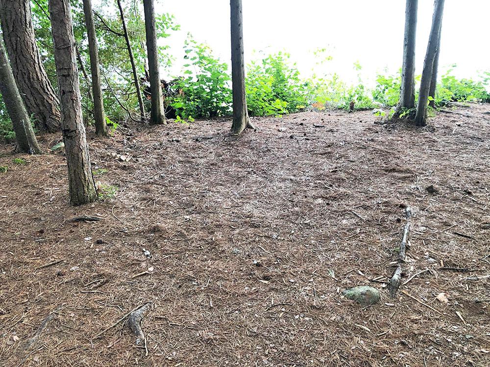 Shirley Lake Algonquin Park Campsite 4 tent spot 2