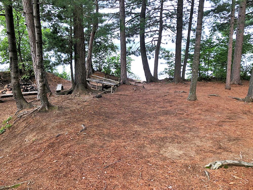 Shirley Lake Algonquin Park Campsite 5 tent spot 1