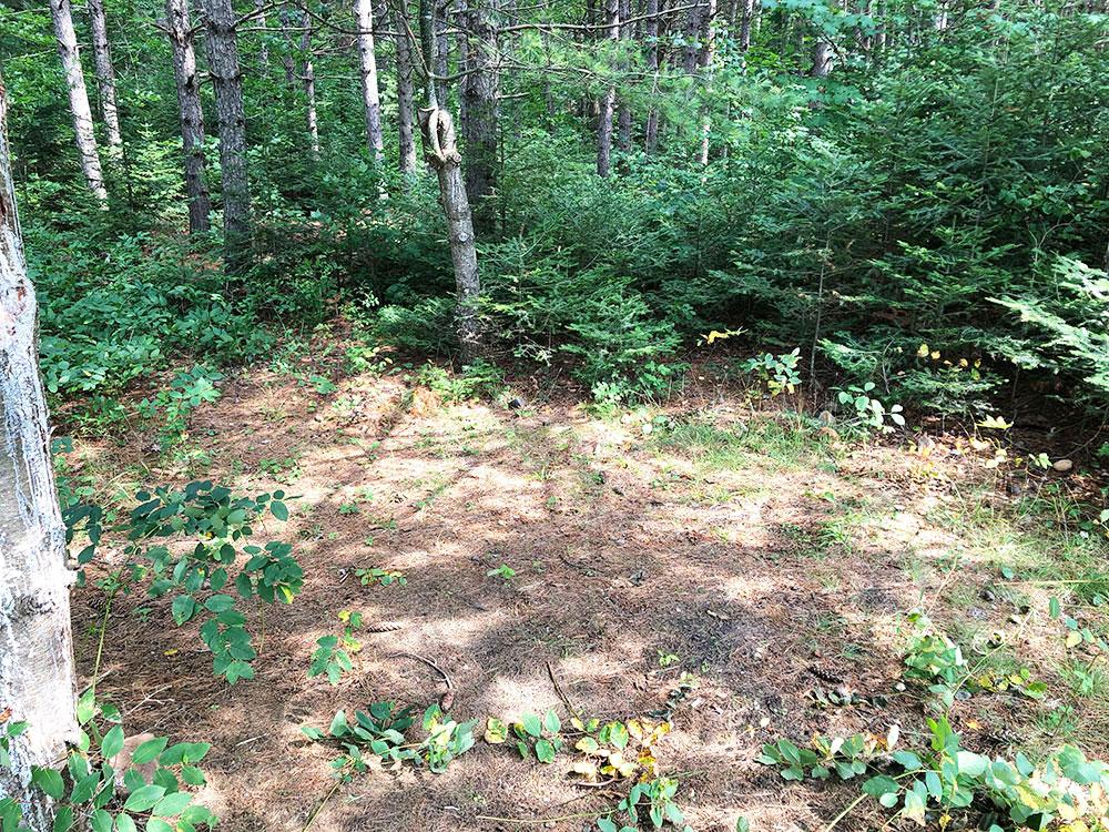 Shirley Lake Algonquin Park Campsite 6 tent spot 1