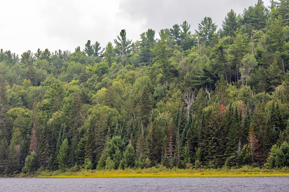 Shirley Lake shoreline August 2021 1