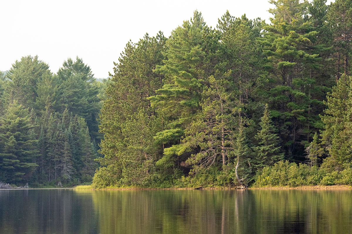 Shirley Lake shoreline August 2021 10