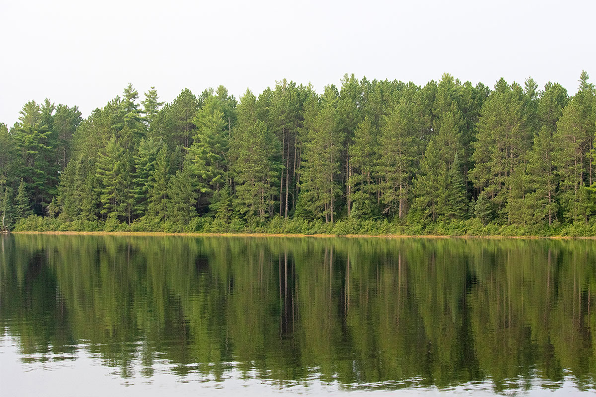 Shirley Lake shoreline August 2021 11