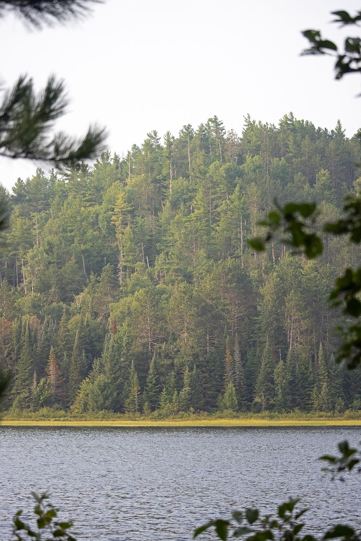 Shirley Lake shoreline August 2021 6