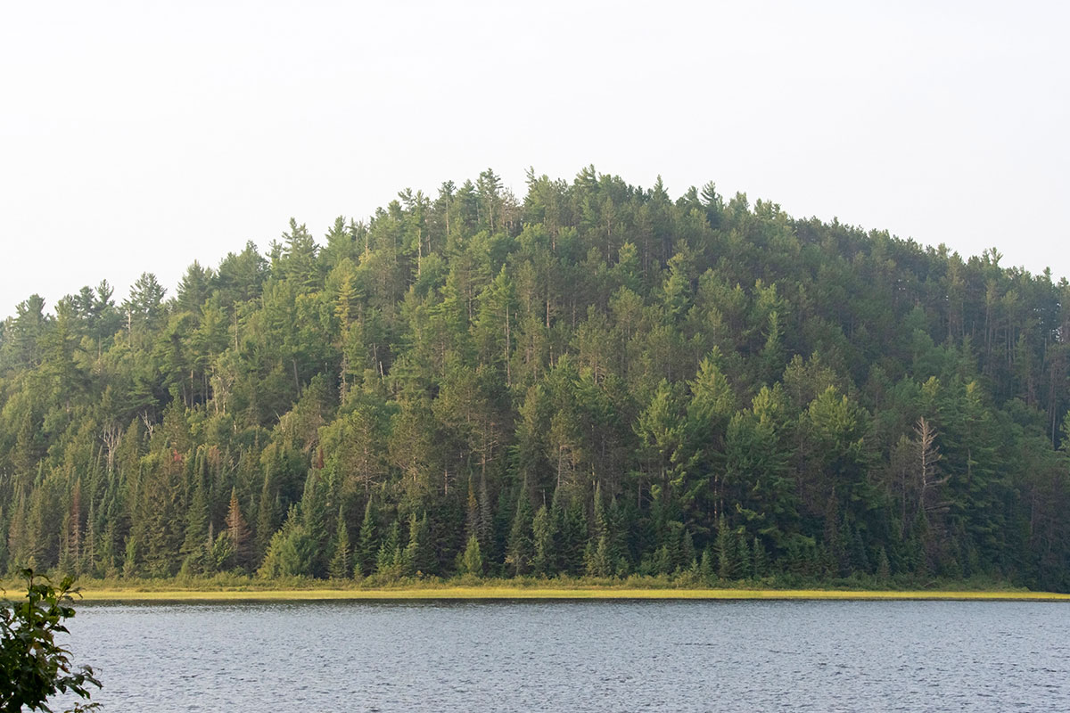 Shirley Lake shoreline August 2021 7