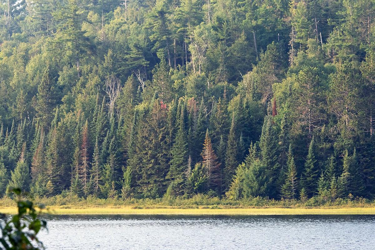Shirley Lake shoreline August 2021 8