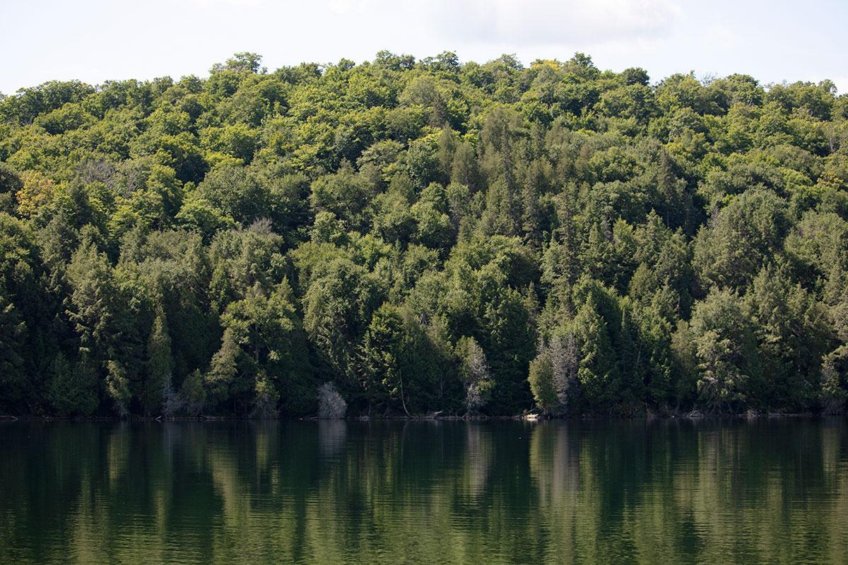 Shoreline on Ralph Bice Lake in July 2021 - 2