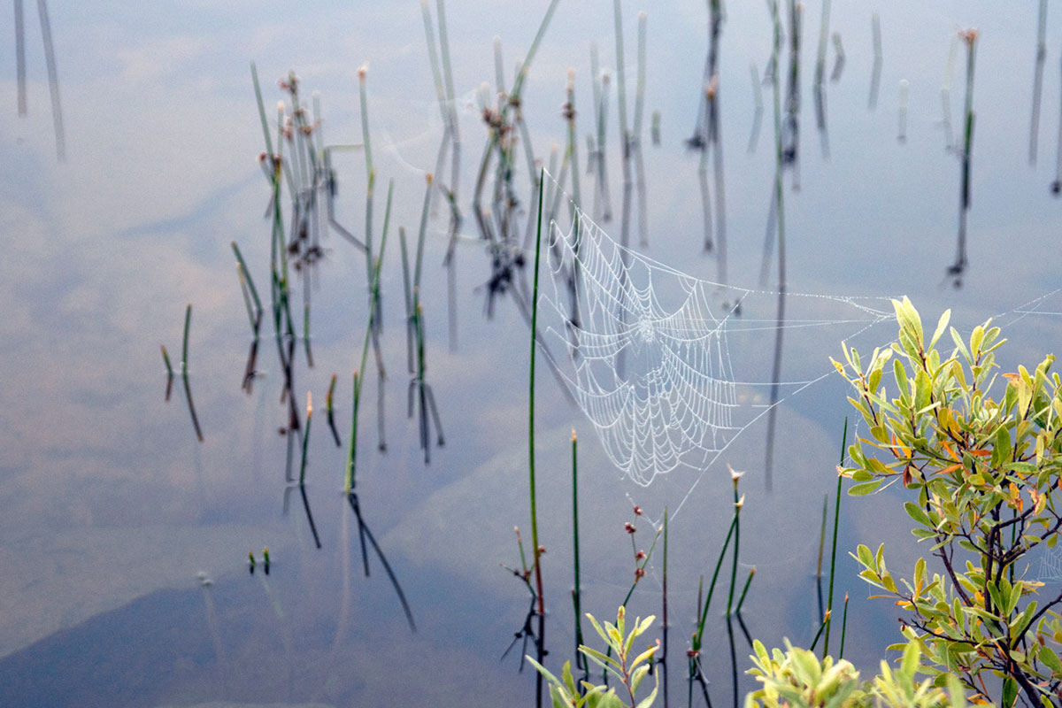 Spider web on Queer Lake campsite July 2021