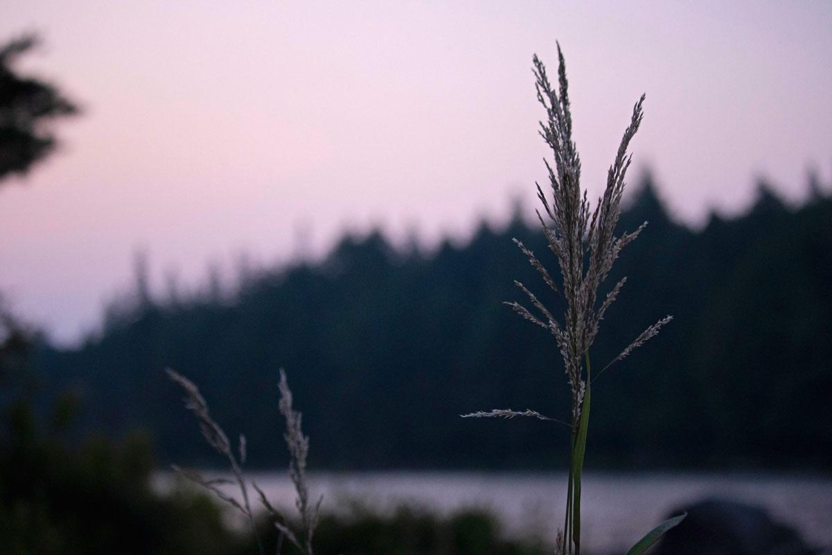 Sunrise on Queer Lake campsite July 2021 Algonquin Park - 1